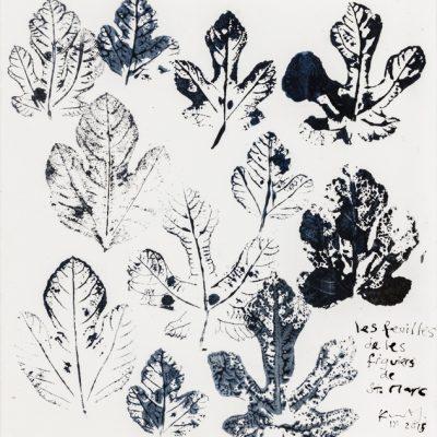 Les feuilles des figuiers de St Marc. 2015.   ink on paper.  38 x 37cm.